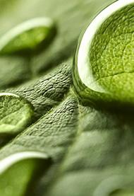Capabilities e tecnologias no mercado de biopesticidas