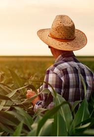 Fertilização Foliar: Ciência aplicada ao desenvolvimento vegetal