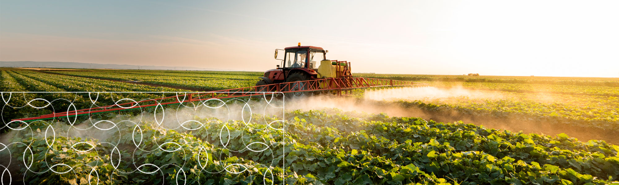Challenges in the Field: Increased Productivity and the Role of Adjuvants