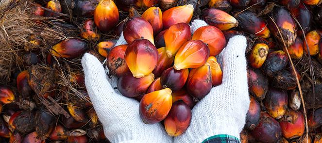 Palm Kernel Oil (PKO)